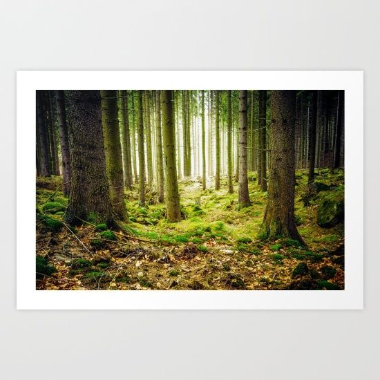 #society6 #art #print #forest #woods #landscape #shop