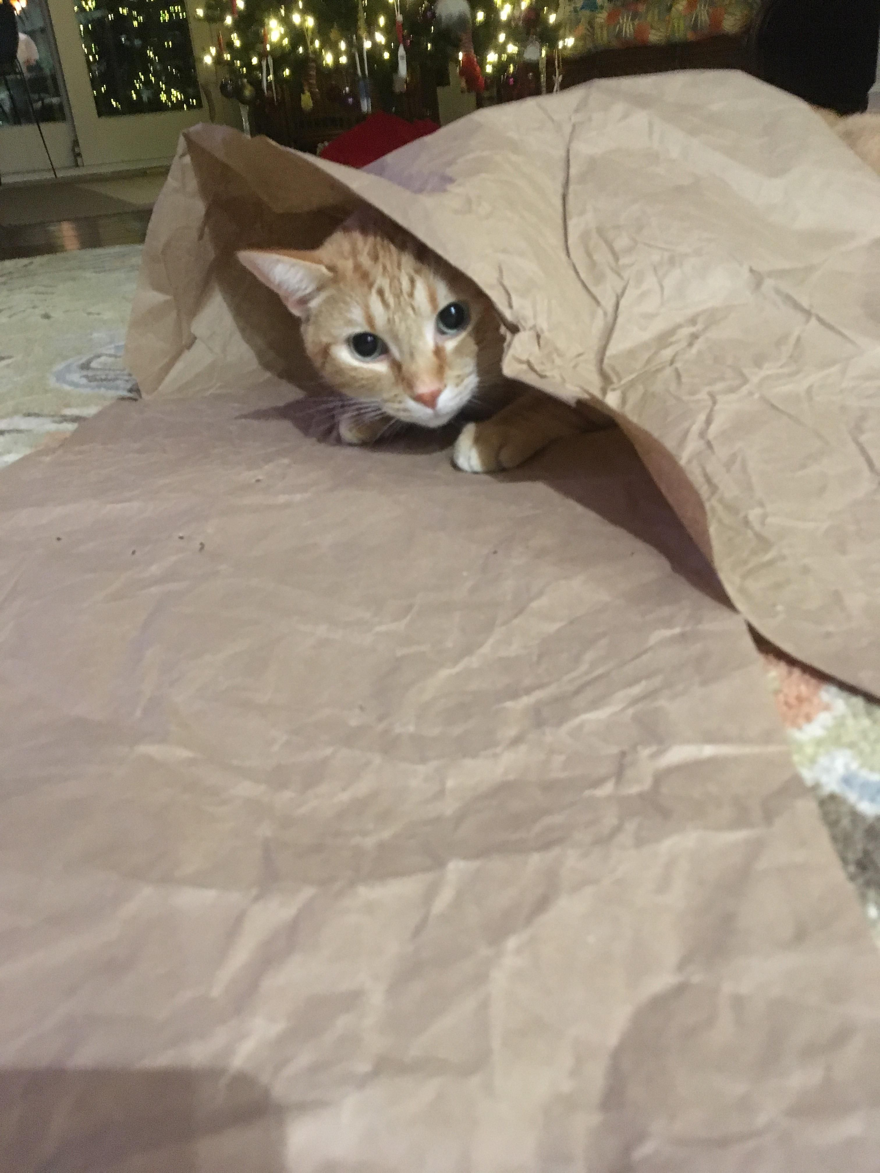 Someone Got A New Bag Today Cat Having Kittens Cat Fleas Cat Hug