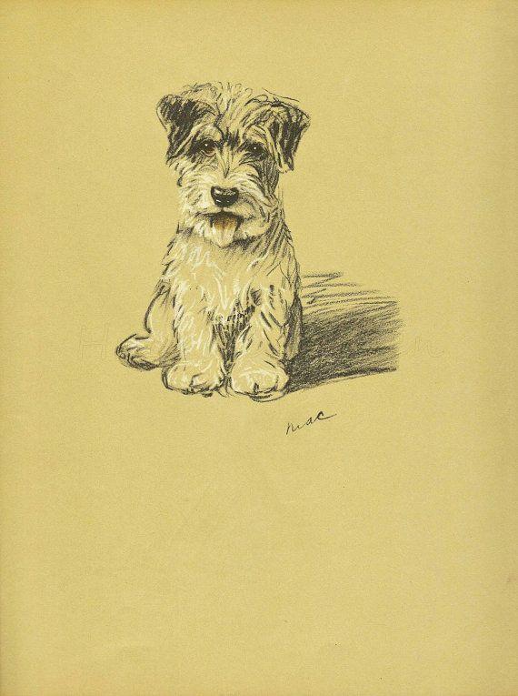 TERRIER Dog Print, 1930s Lucy Dawson Dogs, Wall Art, Puppy PRint ...