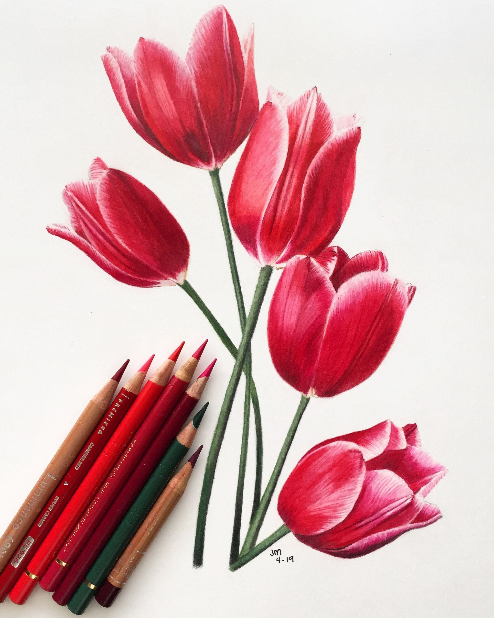 Bouquet of Red Tulips in Colored Pencil // 1 hour Tutorial