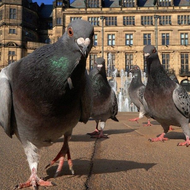 Pigeon Gang Gets Rough With Tourists Funny Birds Pigeon Funny Animals