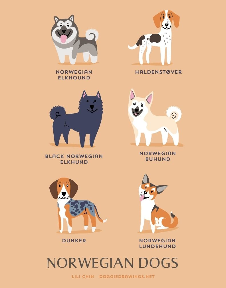 This Is The Tumblr Blog Of Doggie Drawings By Lili Chin To