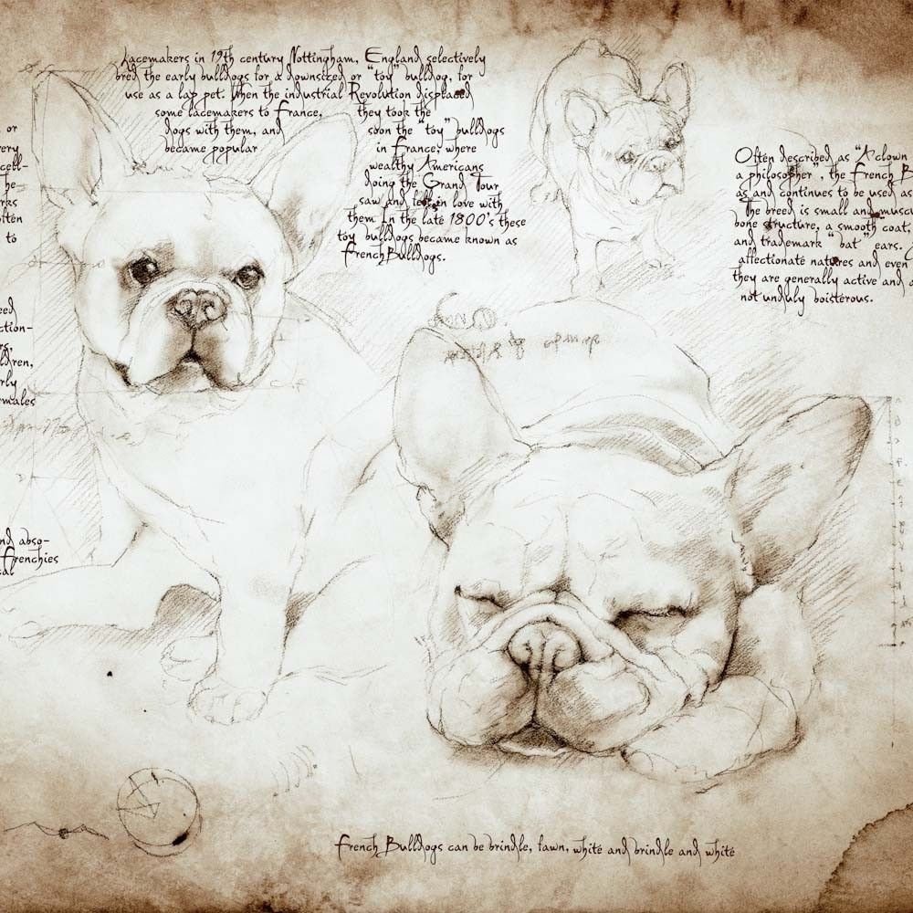 Cats And Dogs Drawn In The Style Of Leonardo Da Vinci Cat Dog