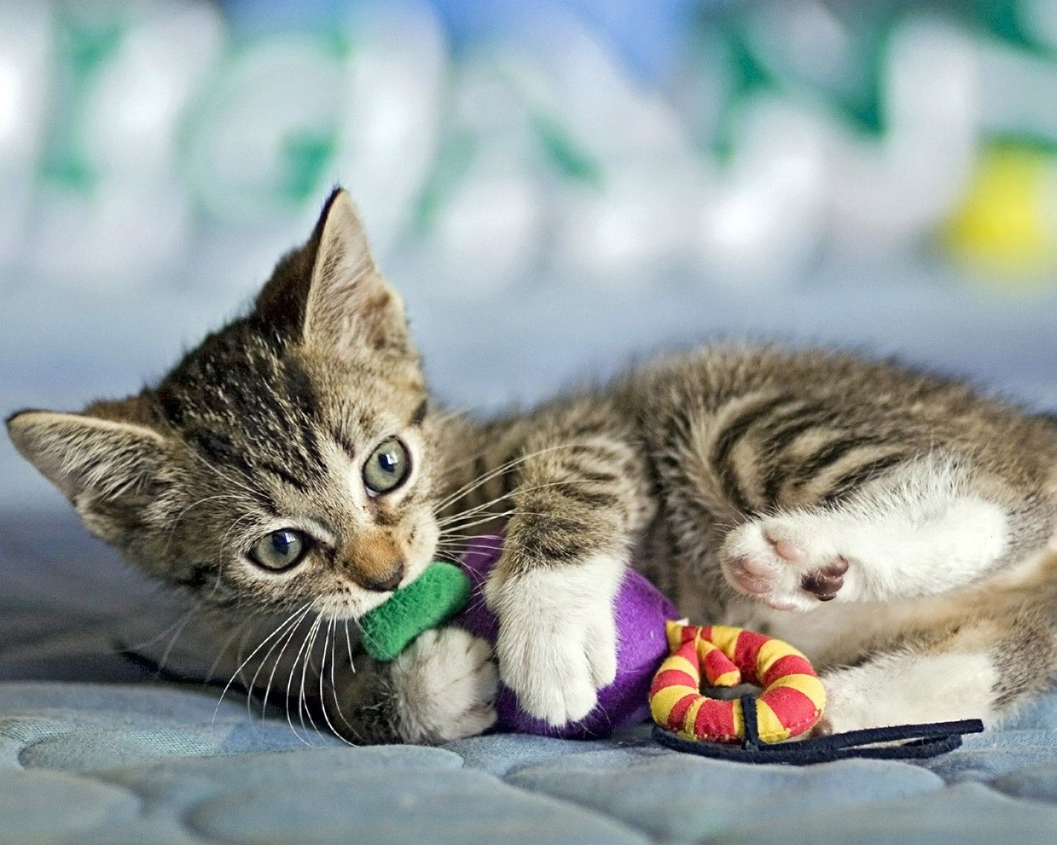 Cutest Kittens 8x10 GLOSSY Photo Picture Cat 8 x 10