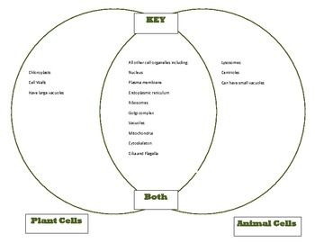 Venn Diagram plant animal cells Comparison Cells unit part 1 KEY ...