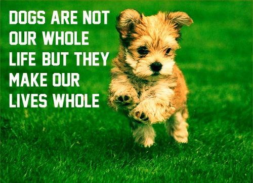 Quotes About Dogs Being Family Hd Wallpaper Images Fashion