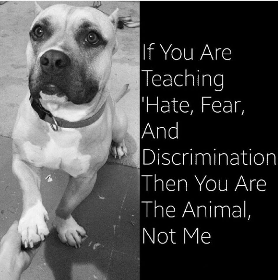Dear PETA: Dogs Respond To PETA Joining Terrible Anti-Pit Bull Coalition | Arin Greenwood