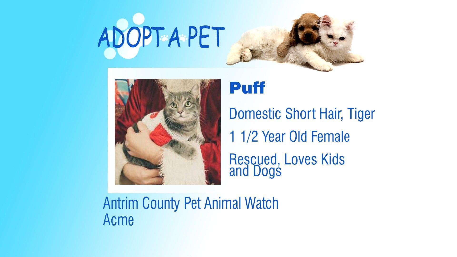 Adopt a Pet Tuesday Bandit, Puff Northern Michigan's