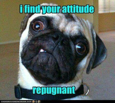 Repugnant Pugs Funny Pugs Cute Pugs