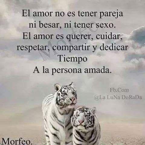 El Amor No Se Basa De Tener A Tu Lado Un Companero A Para