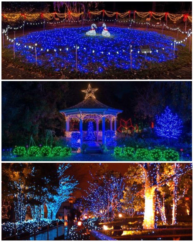 December Nights U0026 Holiday Lights @ Coastal Georgia Botanical Gardens,  Savannah (formerly Called Bamboo