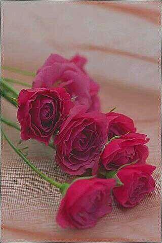 الوردة هذي اهديها لأعز انسانة عندي هي امي Iphone Wallpaper Iphone Background Cute Wallpapers