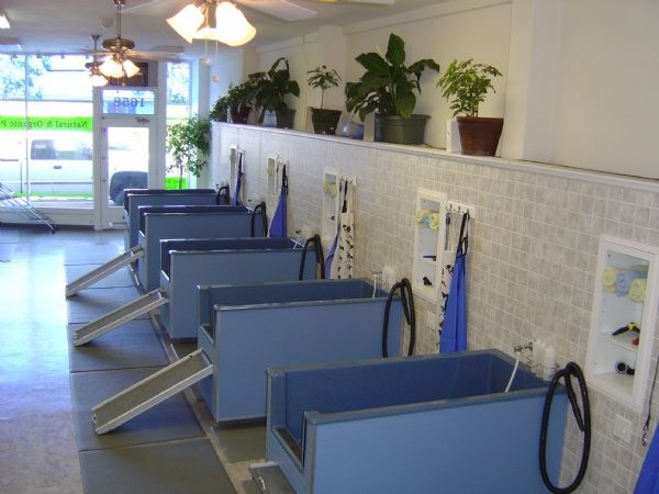 Repinned self service dog wash tub stalls at the dashing pooch repinned self service dog wash tub stalls at the dashing pooch dog wash pinterest service dogs tubs and dog solutioingenieria Gallery