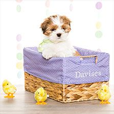 Thirty one gifts gift gallery your way rectangle basket in even your dog deserves an easter basket negle Images
