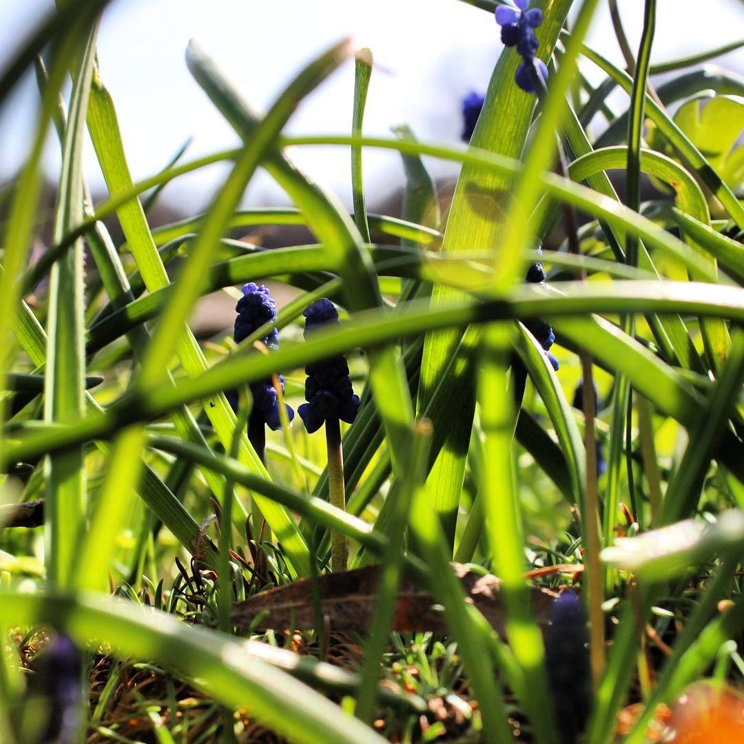 Sichtschutz für scheue Gräser Im Garten Pinterest