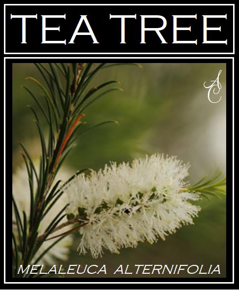 Tea Tree Melaleuca Alternifolia Essential Oil Steam Distilled Certified Organic Tea Tree Leaves From Australia Tea Tree Essential Oil Plant Therapy Tea Tree