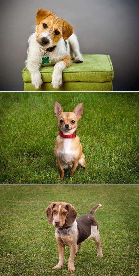 Kym Iffert offers professional dog training services using