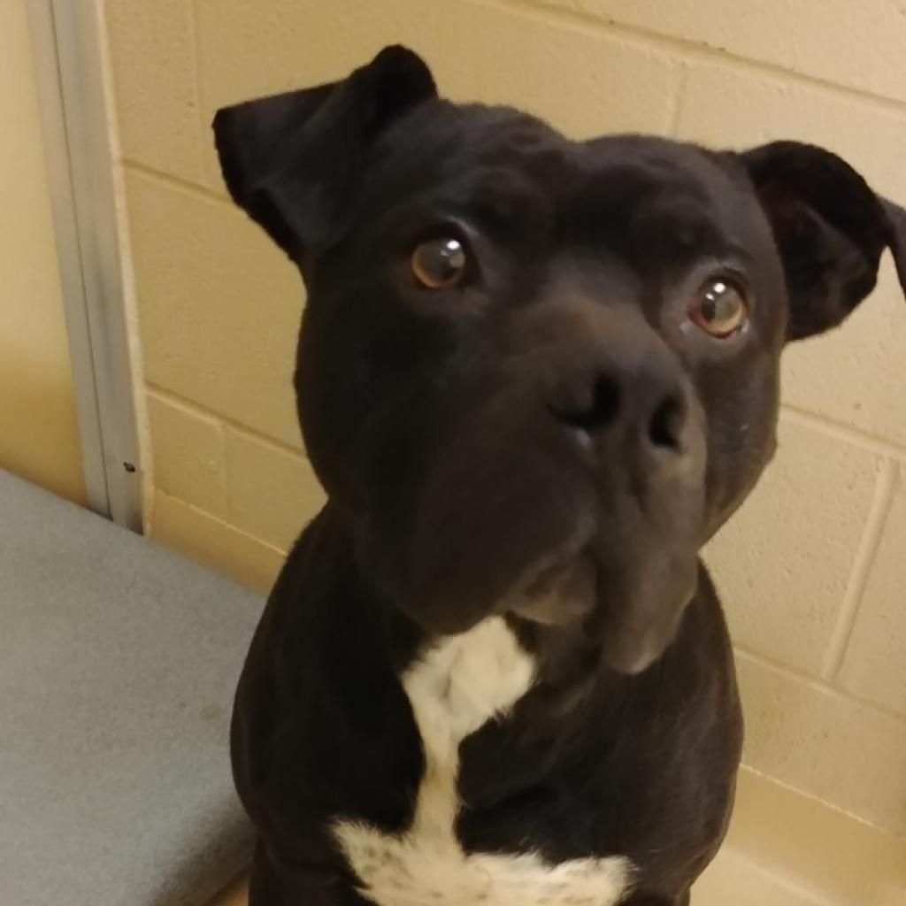 Winston Salem Nc Available Pets For Adoption Forsyth Humane Shelter In 2020 Humane Society Dogs Dog Adoption Dogs