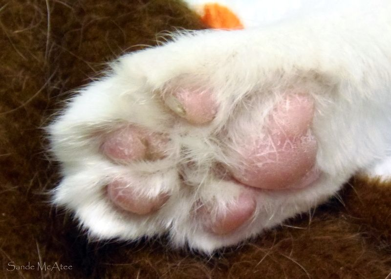 Cute Kitty Feet 3 With Images Cute Cats