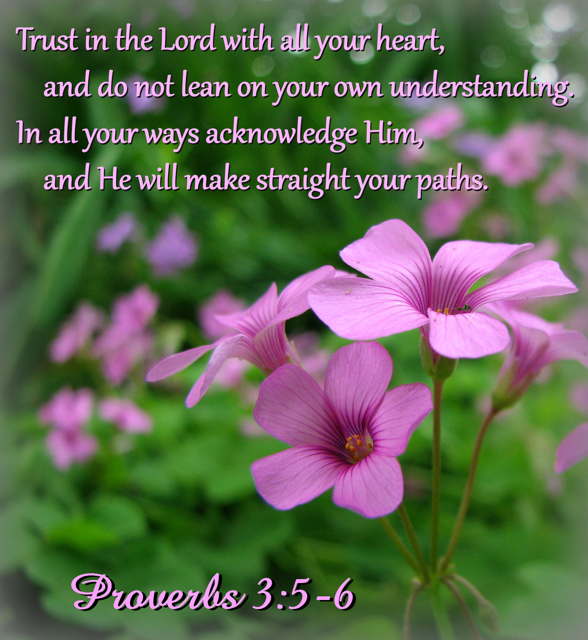 """Trust in the Lord with all your heart, and do not lean on your own understanding.  In all your ways acknowledge Him, and He will make straight your paths.""  Proverbs 3:5-6"