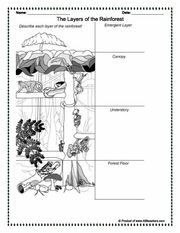 Climates and Biomes (grades 3-5): Worksheets and