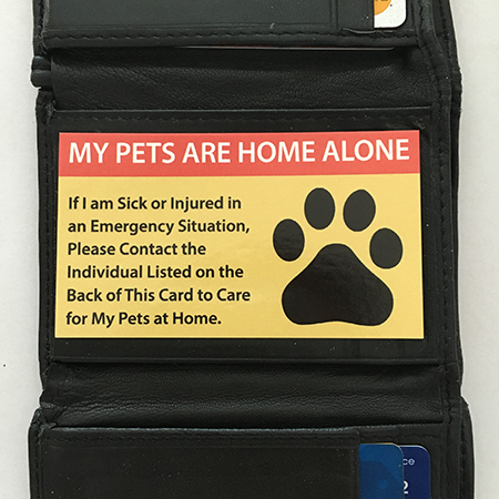 Emergency Pet Keyring Tag | fur baby marlowe | Pet insurance for