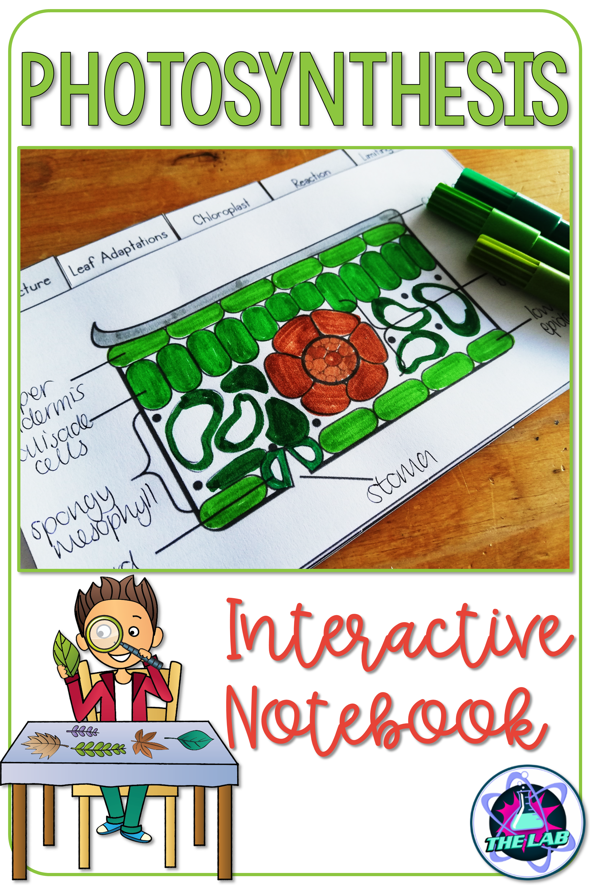 Photosynthesis Interactive Notebook Activity The Lab