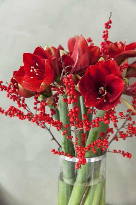 Få koselig julestemning med vakre amaryllis | Inspirasjon fra Mester Grønn