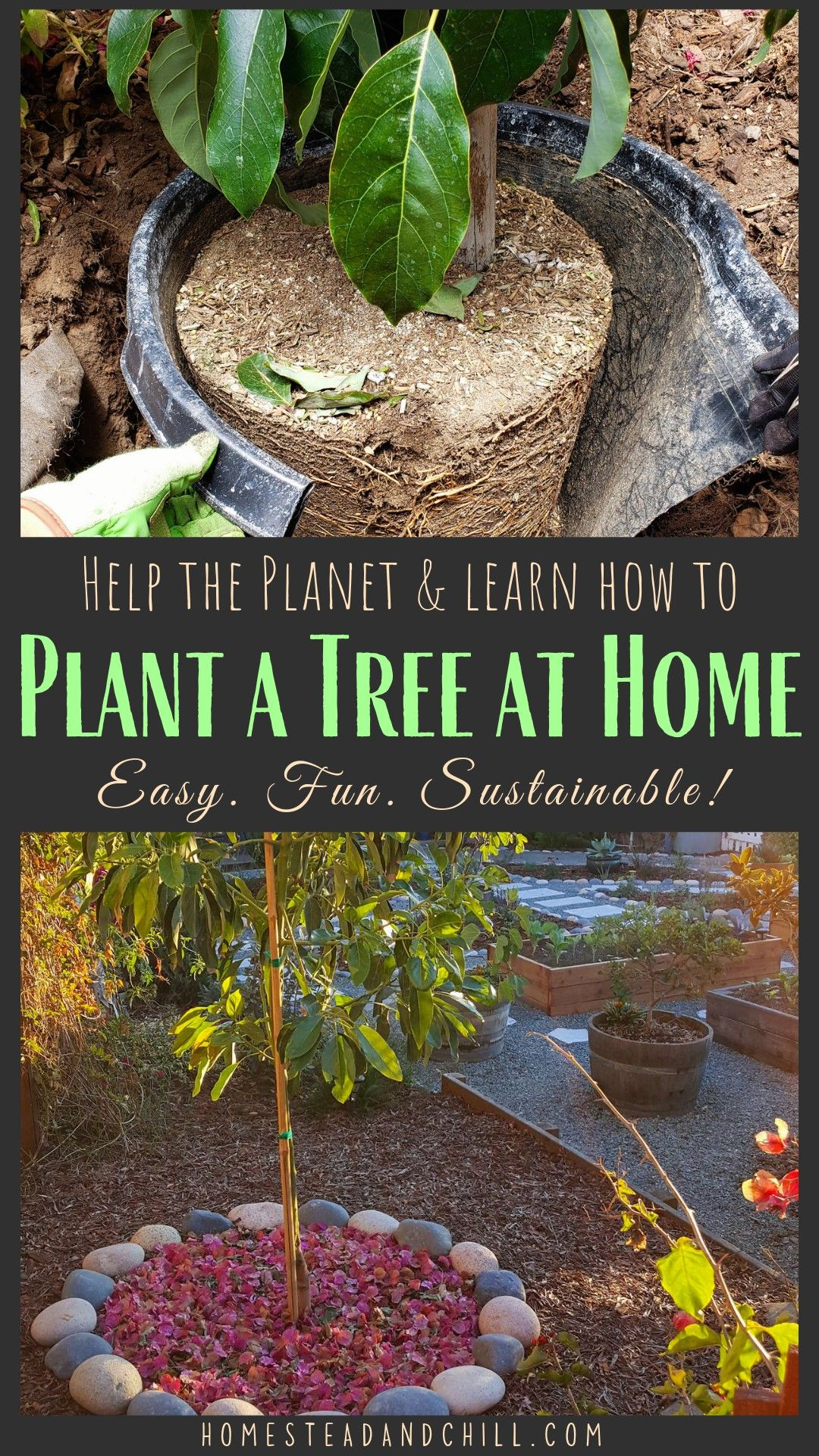 How to Plant a Tree Best Practices for Success Trees to