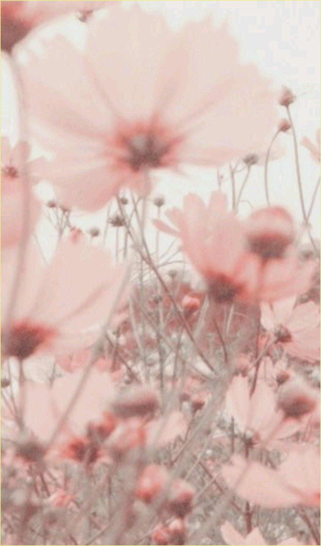 Blumen Hintergrund Rosa  2020