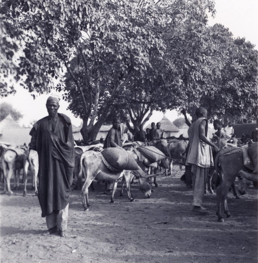 Crop of peanuts, in Cameroon. People bring the crop of peanuts to Maroua   on the back of donkeys. Publication Date :	1940/1960.  Courtesy:   Défap-service protestant de mission, Paris (France)