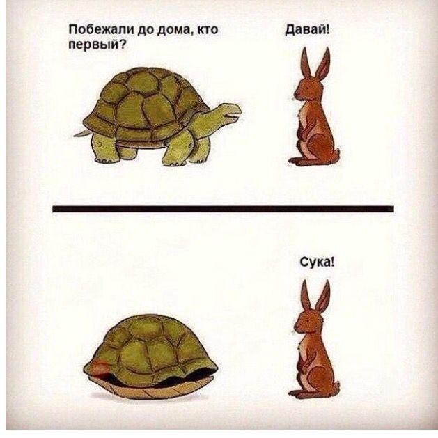 Заяц и черепаха   Смешно, Юмор, Надписи