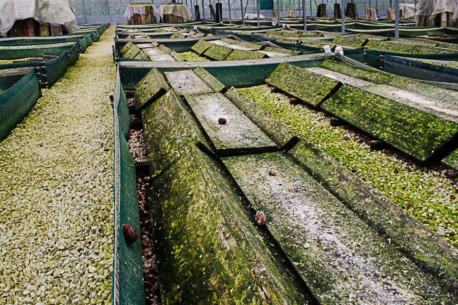 snail farm naousa imathia