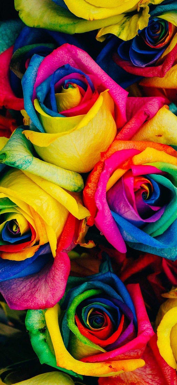 Pin By خلفيات On صور خلفيات موبايل ايفون روعه Rainbow Roses Colorful Roses Flower Photos