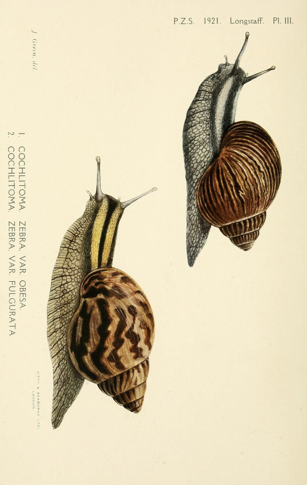 1921, pp. 1-446 - Proceedings of the Zoological Society of London. - Biodiversity Heritage Library