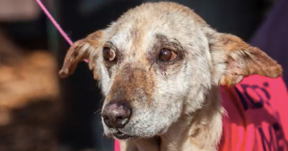 Vet Saves Dog From Euthanasia Finds His Forever Home Instead Animal Rescue Stories Old Dogs Dogs