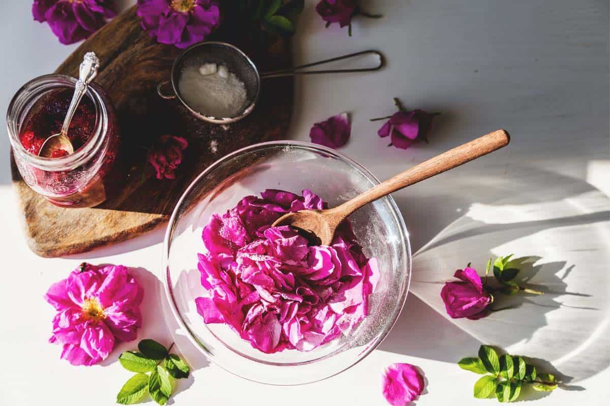Edible roses varieties growing guide care problems