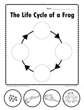 Free Printable Life Cycle Of A Frog Worksheet