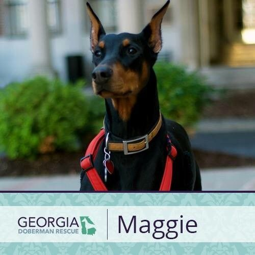 Adoption Pending For More Information On Maggie Please Check Out