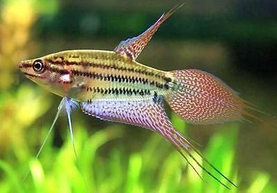 Pin On Fish Stuff