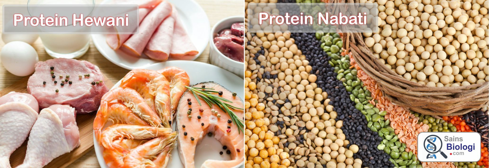 Protein Hewani Dan Nabati Zat Makanan Makanan Sistem Pencernaan