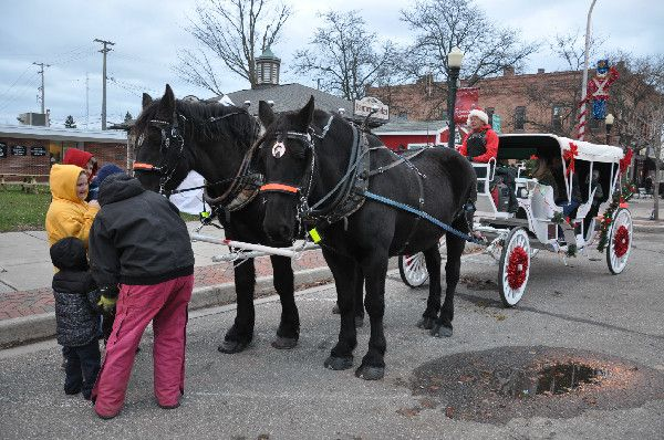 Percherons Bud and Chance enjoyed attention from children while the carriage loaded again for a trot around town for a Christmas ride.