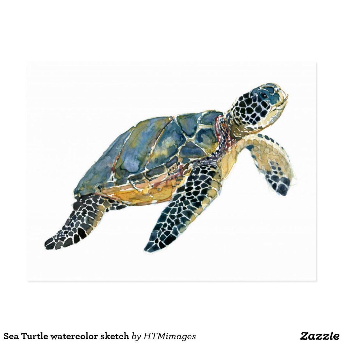 Turtle watercolor sketch Postcard