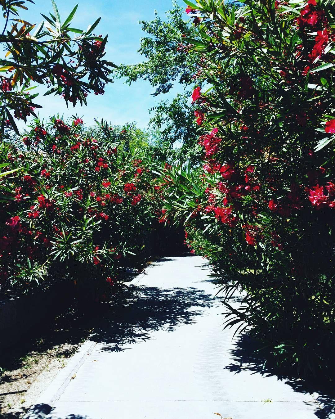 Cuál es la mejor hora del día en verano? Yo lo tengo claro... #ebomlifestyle #travel #Spain #garden