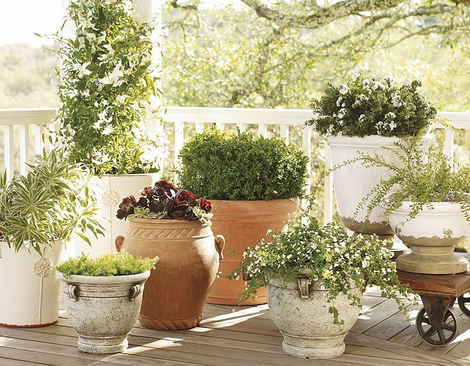 Tuscan Patio Pottery Designs | Planters, Flower Pots U0026 Flower Planters |  Pottery Barn Potted