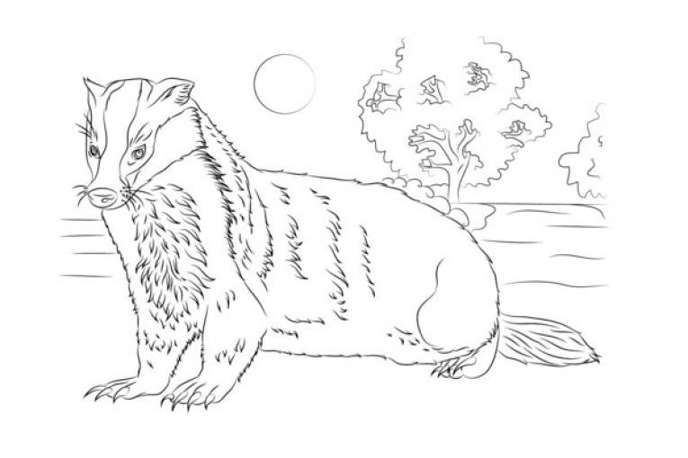 Badger Coloring Page Badgers Are Short Legged Omnivores In The Family Mustelidae Which Also Inclu Animal Coloring Pages Coloring Pages Giraffe Coloring Pages