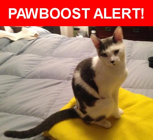 Please spread the word! Georgie was last seen in Cleveland Heights, OH 44121.    Nearest Address: Near Bluestone Rd & Noble Rd