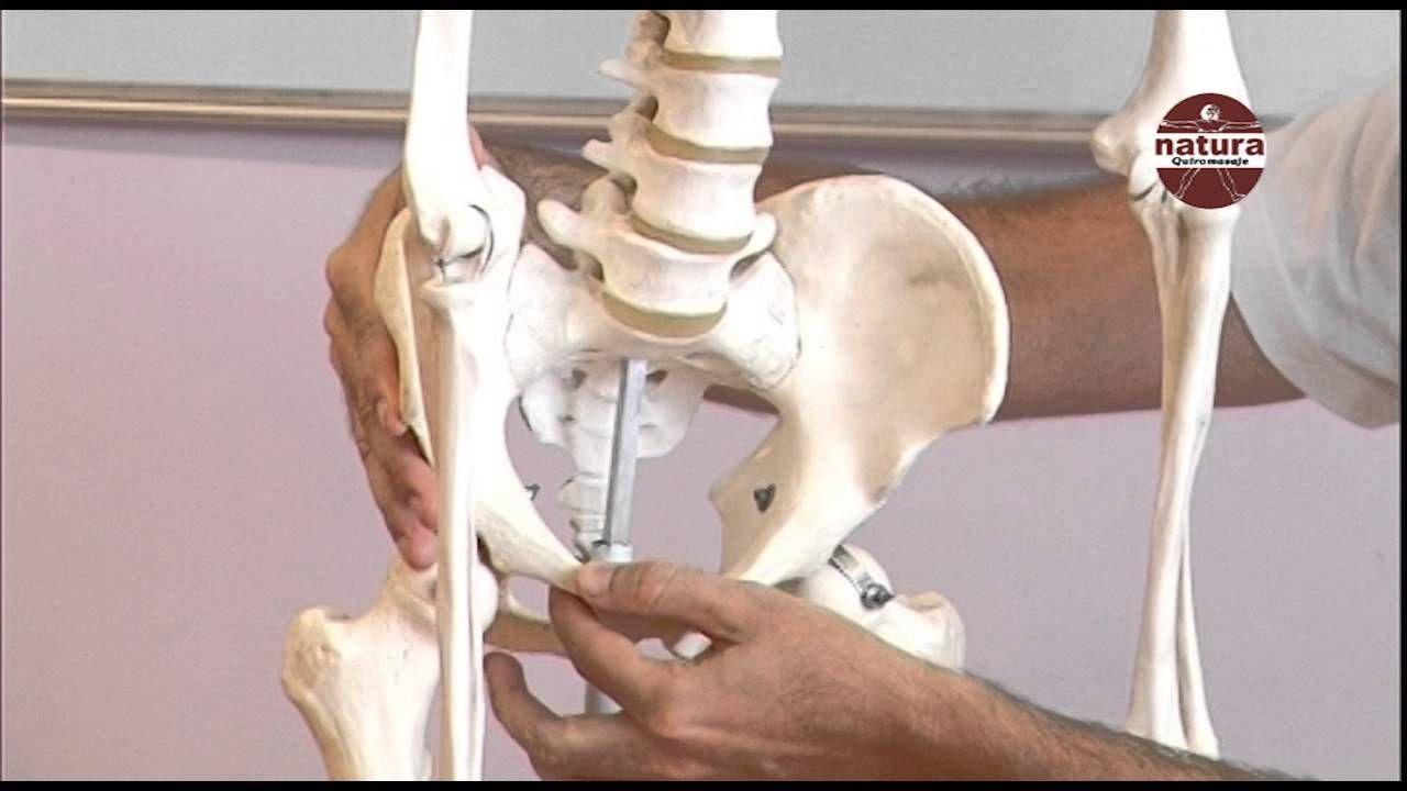 Clases de Anatomía. Pelvis, cadera, sacro. Natura | Anatomía y ...