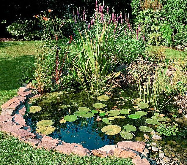 Oxygenating Pond Plants For Small Ponds Pool Design Ideas Garden Pond Design Ponds Backyard Ponds For Small Gardens