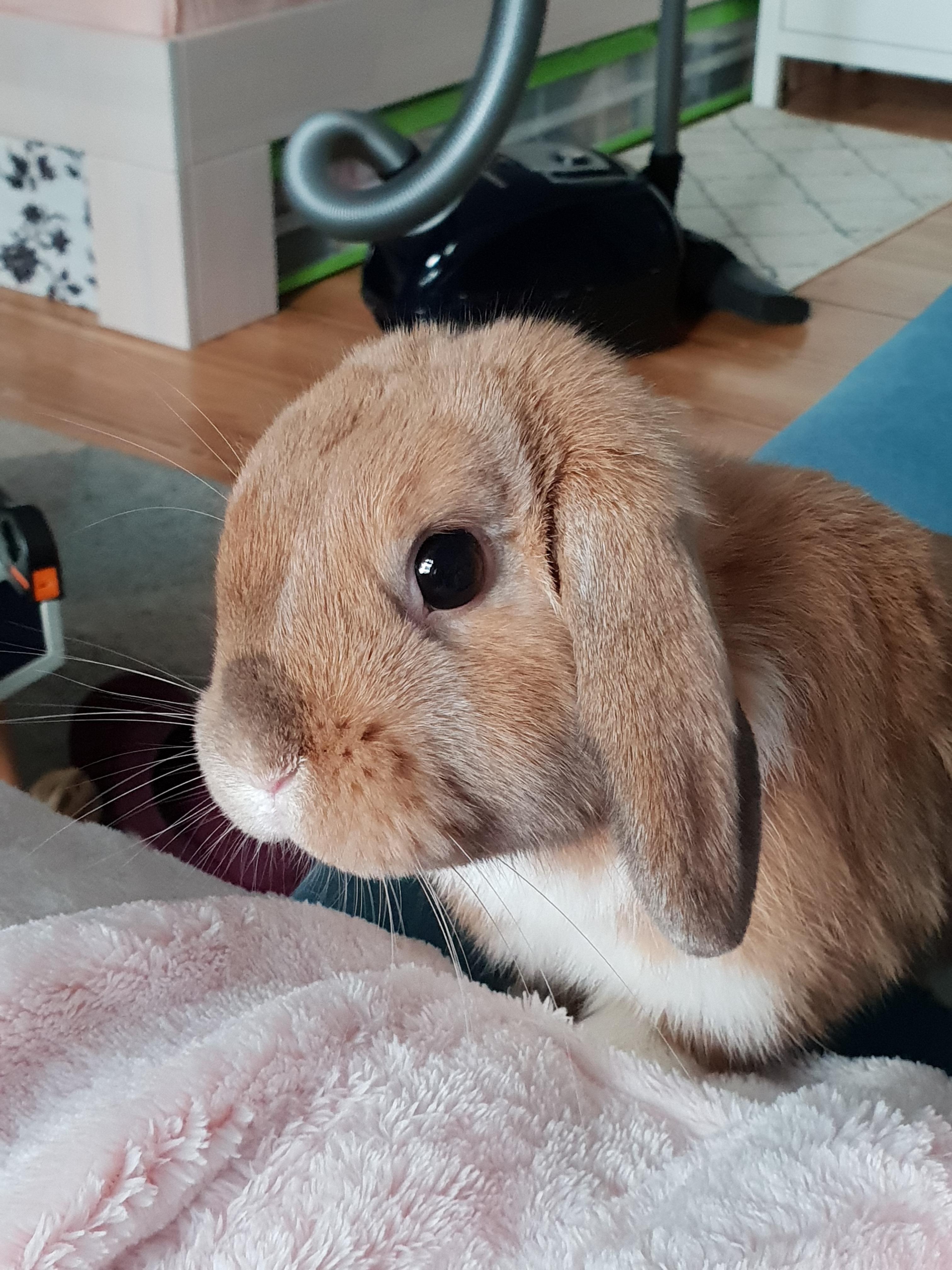 pin von adam burt auf rabbits  kaninchen hase